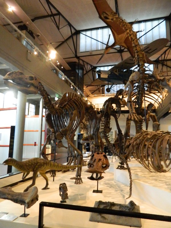 image Dinosaur display