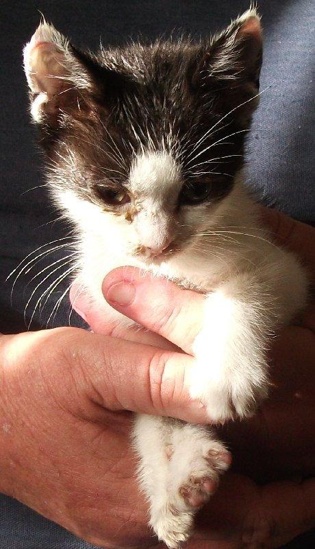 image kitten