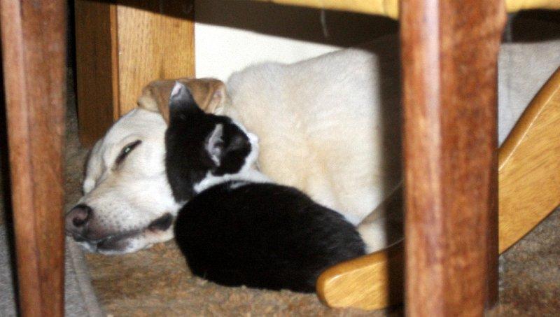 image kitten and dog sleeping