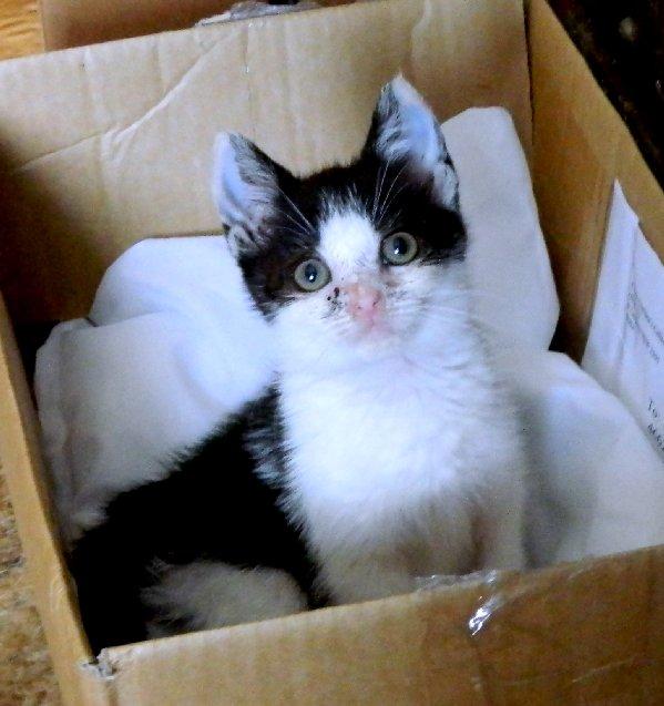 image kitten 10 weeks