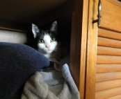 image cat in cupboard