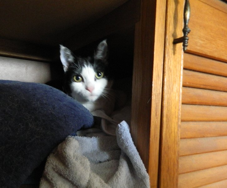 image cat in cupboard