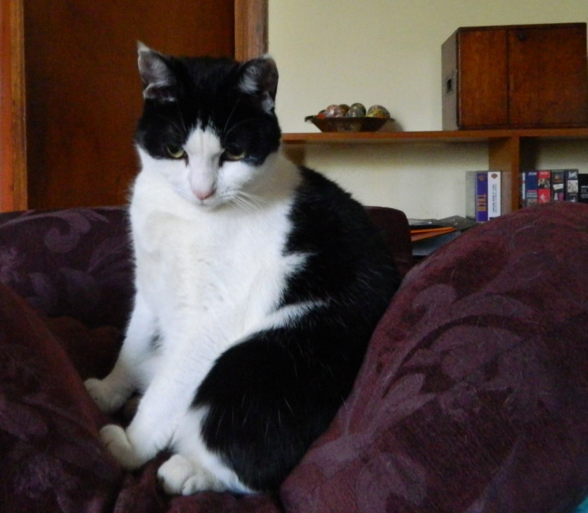 image cat sitting