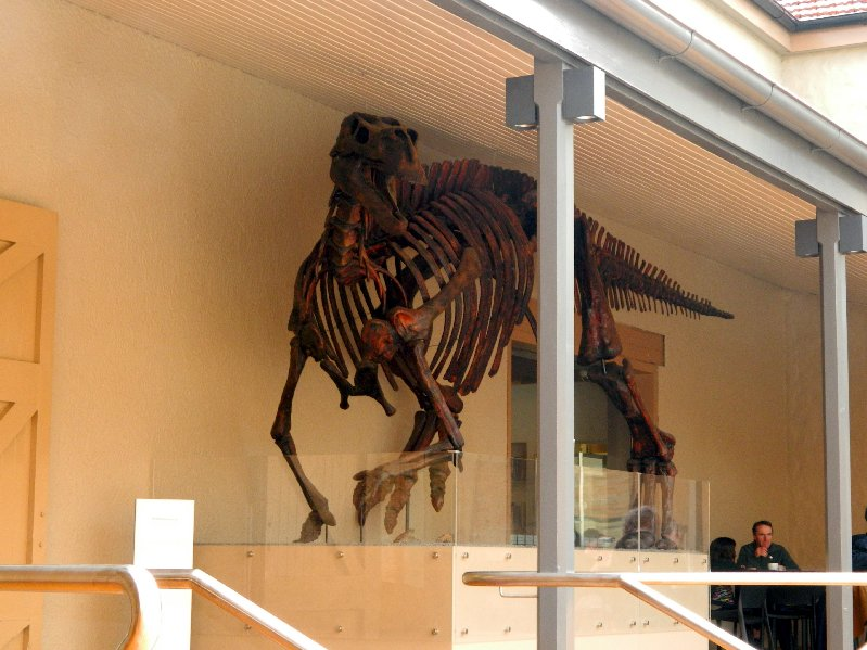 image dinosaur