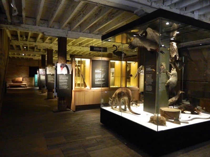 image display case-animals and birds