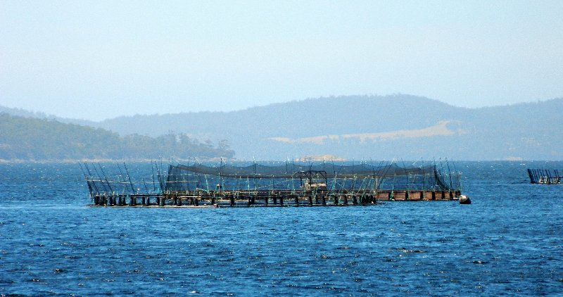 image fish farm