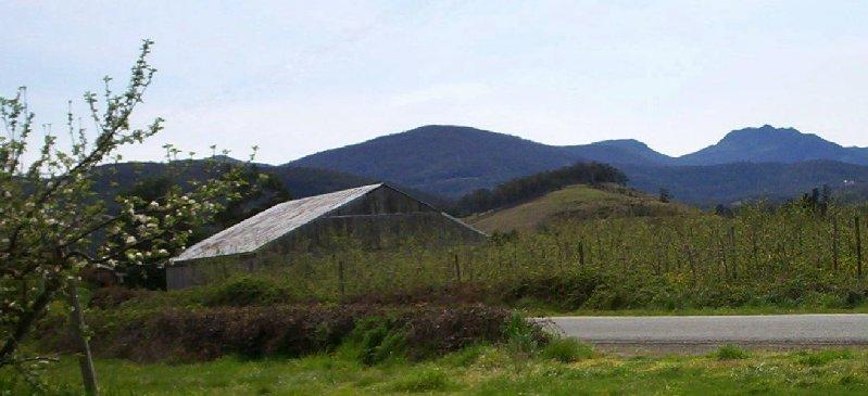 image orchards Ranelagh