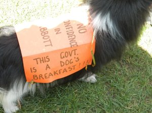 """Image """"Dog's Breakfast"""" #marchinmarch Hobart"""