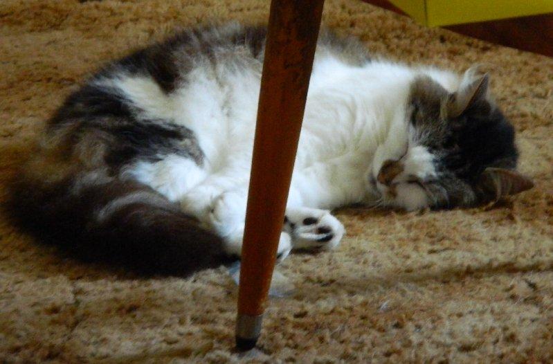 image sleeping cat