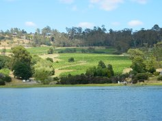 image vineyards by the river