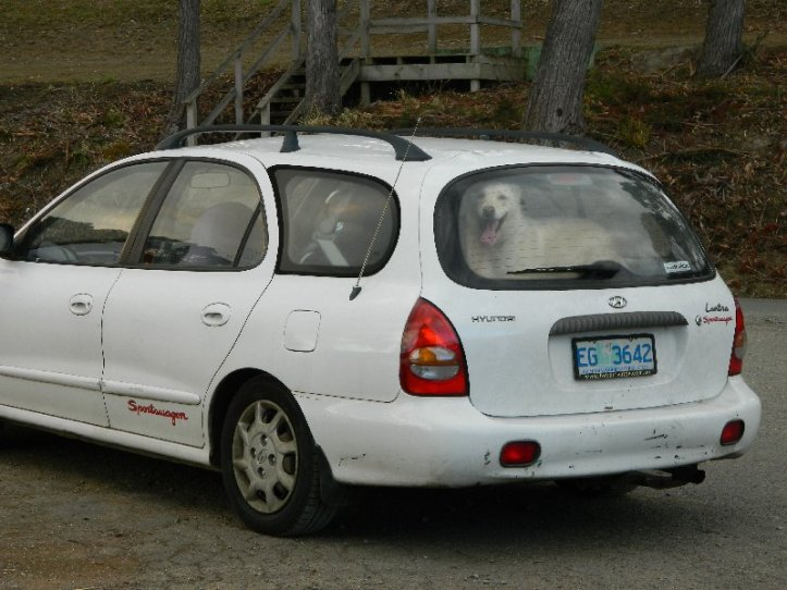 image dog in car