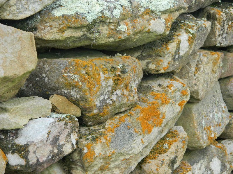 Dry Stone Wall one of many in Oatlands