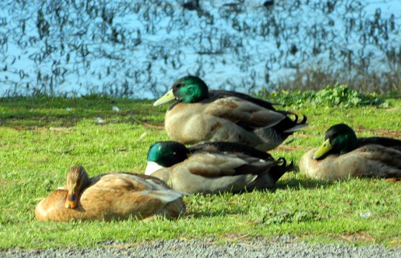 Best to let sleeping ducks lie.