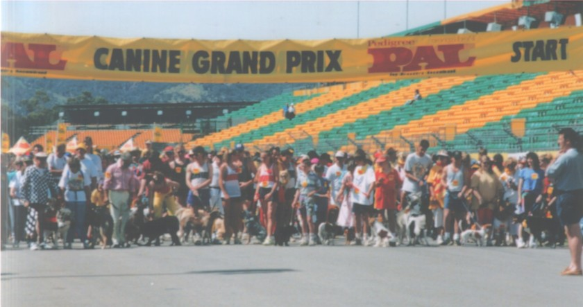 The start of the Canine Grand Prix.