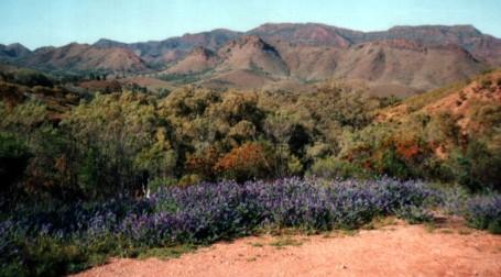 Parachilna Gorge, Flinders Ranges, South Australia