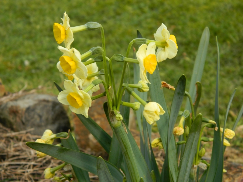 The first spring flowers in our garden.
