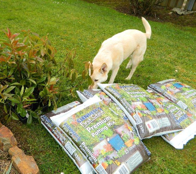 Cindy investigates the new plants