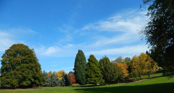 Autumn colours at the Botanical Gardens