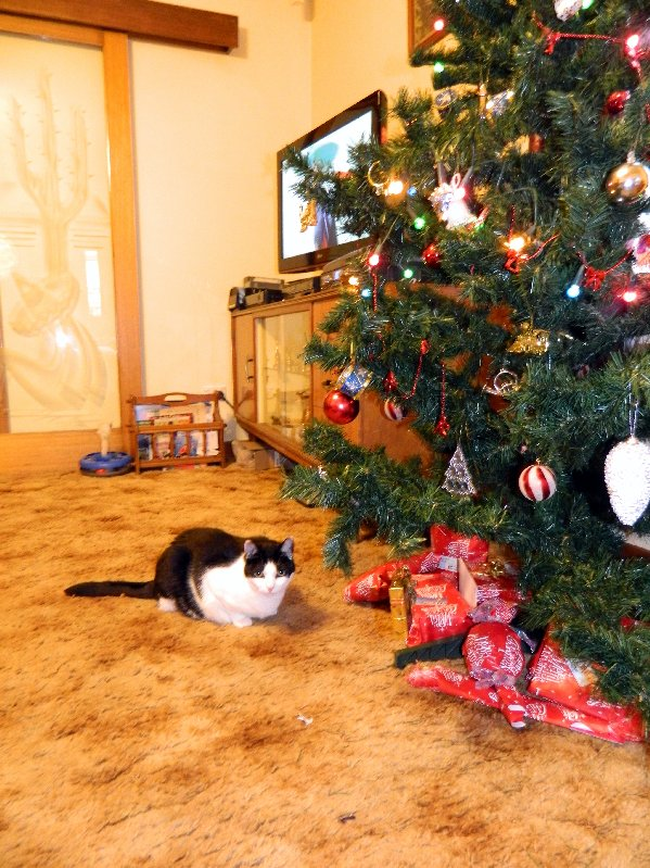 Polly wonders which is her present.