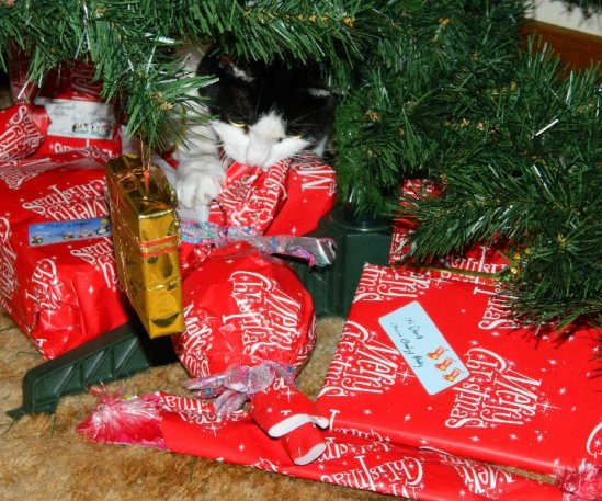 Polly can't wait to open her presents.