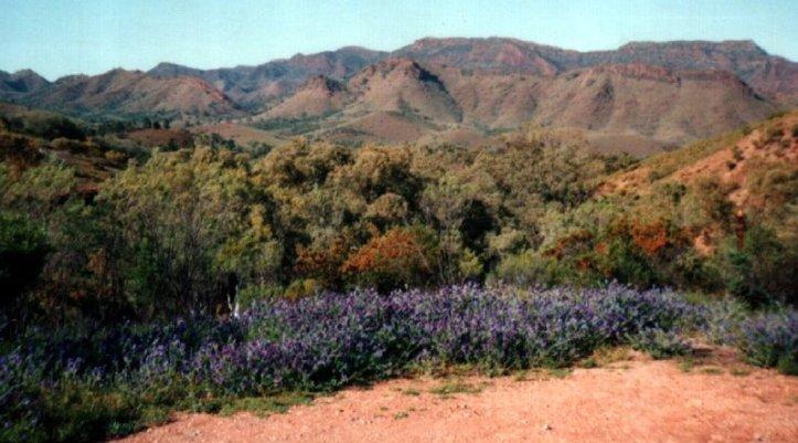 Parachilna Gorge, South Australia