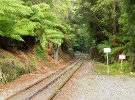 Tracks through the forests. West Coast Wilderness Railway, Tasmania