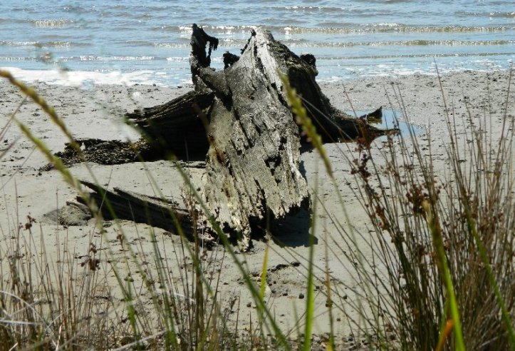 Driftwood on the beach , Huon River Estuary