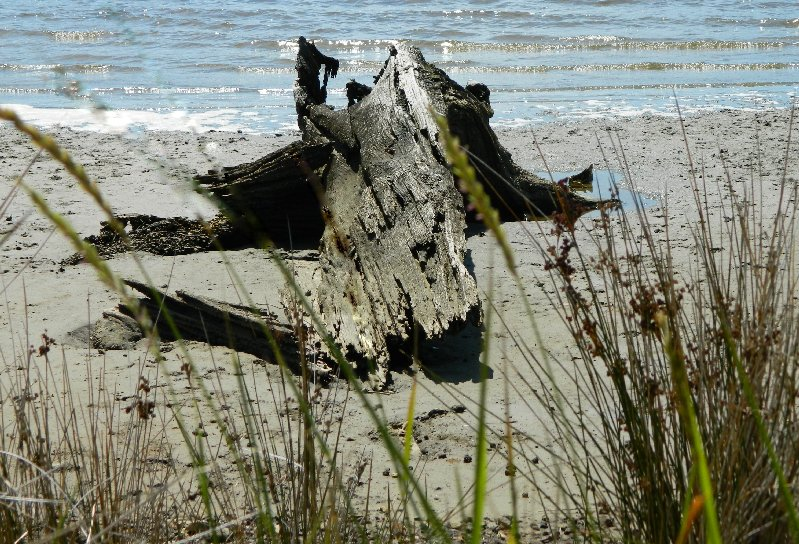 Driftwood on the beach , Huon River Estuary