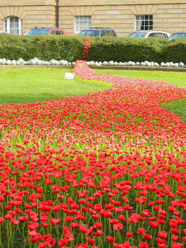 """Poppies """"planted"""" in Parliament Square Gardens, Hobart"""
