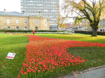 The field of poppies in Parliament Square Gardens
