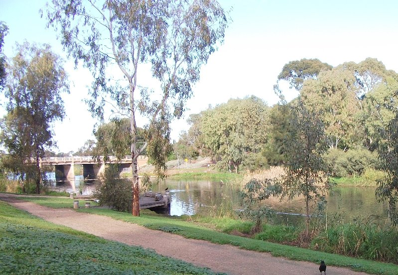 The River Torrens Linear Park bear Henley Beach Road, Lockley's , South Australia