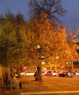 An autumn evening - Murray Street, Hobart.