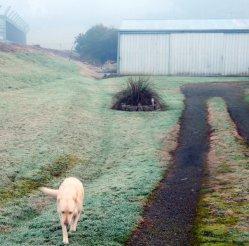 frosty yard