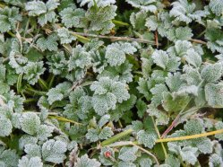 frosty morning 2015