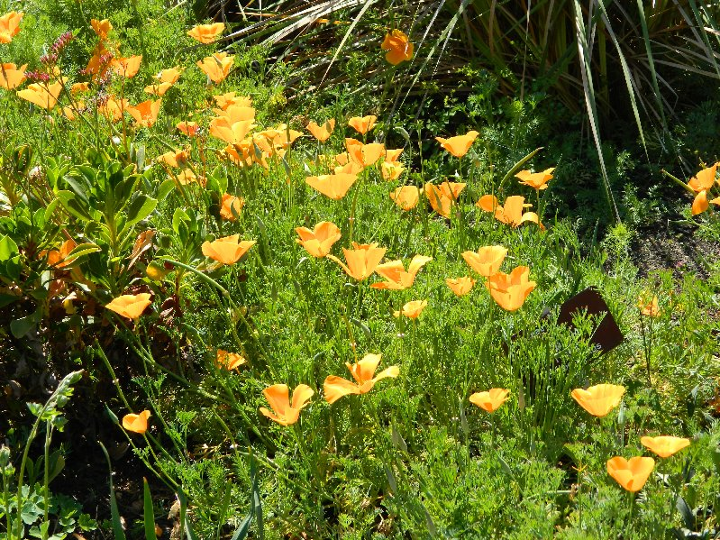 orange/yellow flowers