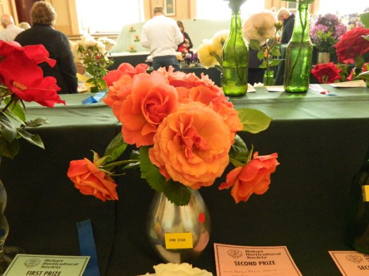 Roses at a flower show in Hobart.