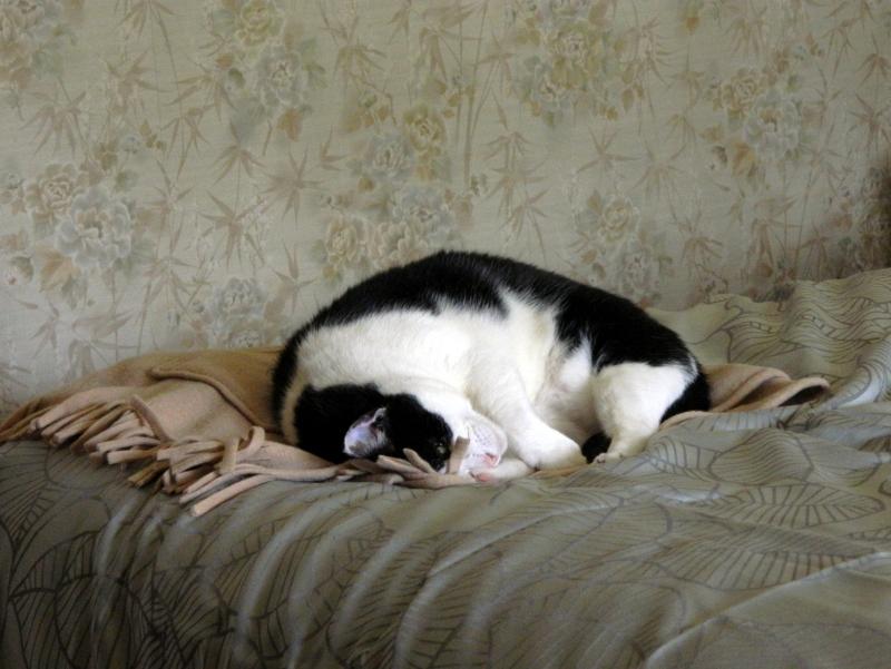 Polly asleep on my bed.