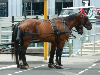 Carriage horses.