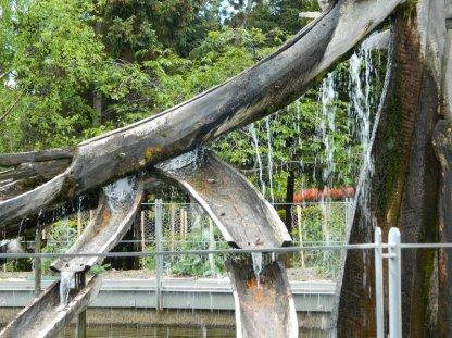 fountain, Botanical Gardens, Hobart