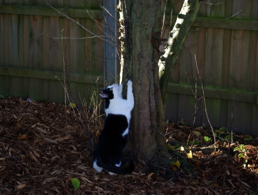 Polly is interested in the birds in the apple tree.