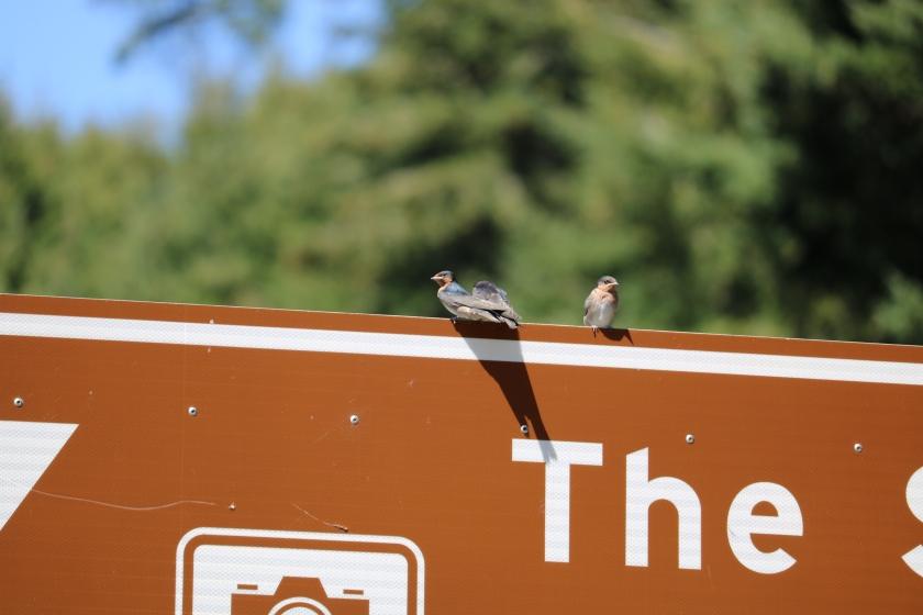 Birds on a sign, photo by Ally Clark