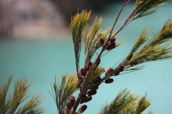 Foliage, photo by Allyson Clark