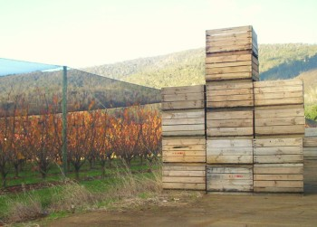 Harvest time in the Huon Valley