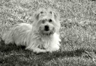 Naomi's dog Teddy