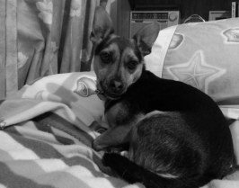 Naomi's dog Toby