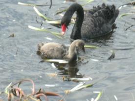 Lake Dulverton