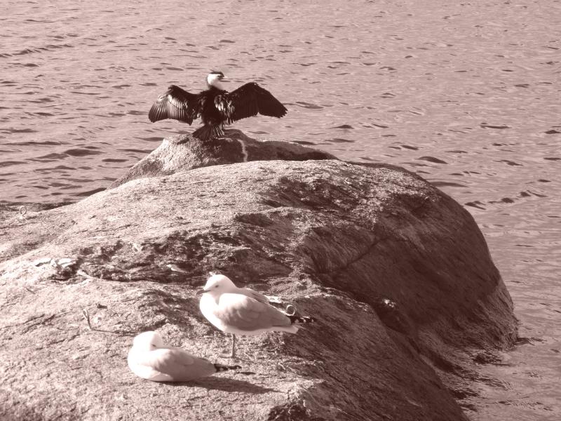 sepia bird 2