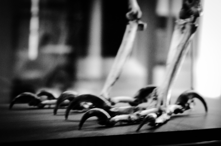 Claws on a skeleton at the museum.
