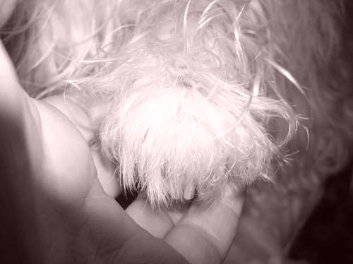 Cee's Black & White Challenge:Hands, Feet, Paws