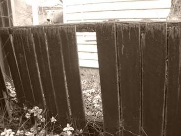 My Poor Decades Old Wooden Fence